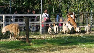 Photo: Animali della fattoria