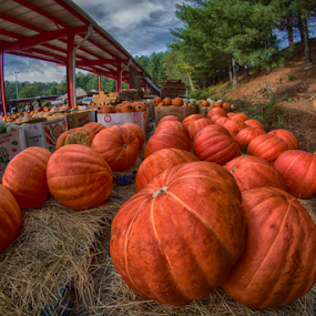 Pumpkins by Mark Turnau - Food & Drink Fruits & Vegetables ( orange, color, farmer's market, wide angle, pumpkins, vegetables, ultrawide,  )