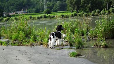 Photo: Da sie wirklcih neugierig ist muss sie wissen, was da drüben ist...