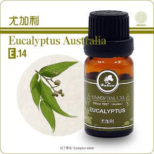 尤加利精油10mlEucalyptus澳洲特級尤加利