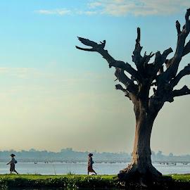 Dead tree by Aung Kyaw Soe - Landscapes Travel (  )