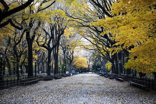Central Park Autumn Autumn in Central Park New