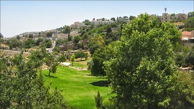 Photo: Иерусалим. Гефсиманский сад (так нам сказали).