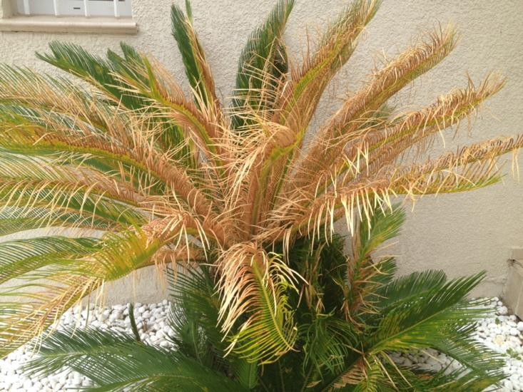 Une image contenant plante, arbre, palmier, eau  Description générée automatiquement