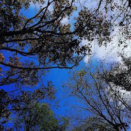 by Vesna Djordjevic - Nature Up Close Trees & Bushes