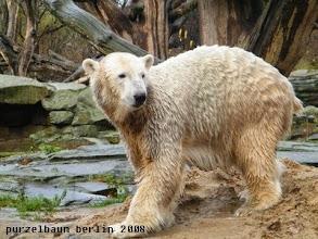 Photo: Die Umgebung muss Knut im Auge behalten ;-)