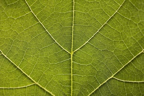 natural symmetry di marta.pir