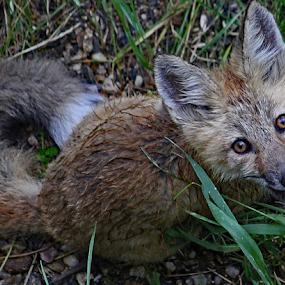 by Kari Schoen - Animals Other Mammals