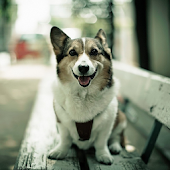 Wallpapers & Themes Dogs