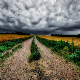 Into The Storm by Kent Moody - Landscapes Prairies, Meadows & Fields ( storm, field, road, farming, farm, wheat, clouds )