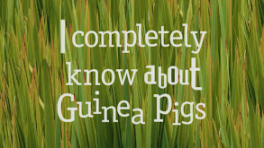 I Completely Know About Guinea Pigs thumbnail