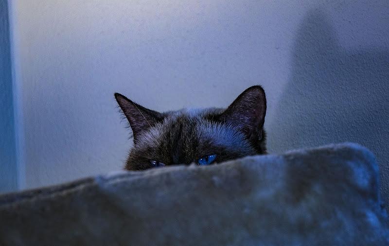 Blue Eyes di giorgia_cocco