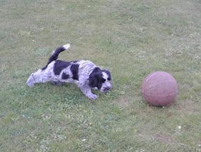 Photo: mit dem Lieblingsball von Benni (darf sich aber auch mit spielen - er ist sehr fürsorglich zu ihr)