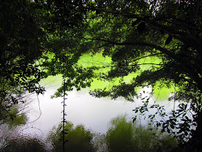 Photo: Lampi sademetsässä - ja lisää vihreää