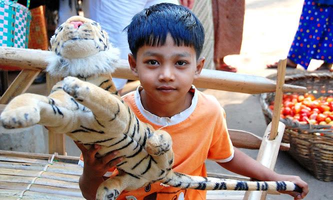 Le tigri dell'Asia. di serendipity4