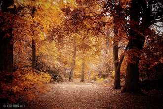Photo: Good morning G+  Image taken last year in a local forest, I love the colours of autumn