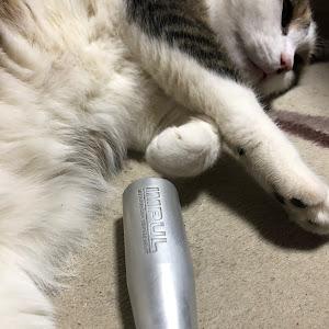 フェアレディZ 300ZX ツインターボ  2シーターTバールーフ 平成元年式のカスタム事例画像 バイスさんの2020年03月29日08:33の投稿