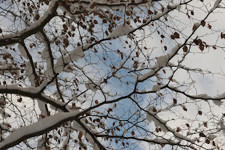 Photo: Lying on my back, looking up.