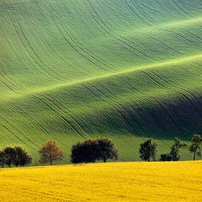 Field Waves by Martin Rak - Landscapes Prairies, Meadows & Fields ( colors, waves, green, yellow, landscape, spring, nature, south moravia, czech republic, trees, evening, light, fields )