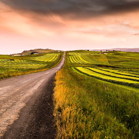 Road by Edvald Geirsson - Landscapes Mountains & Hills ( hay-making, countryside, iceland, country road )