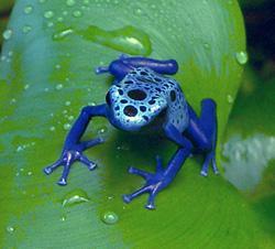 http://alins.ru/images/creep/frog/2.jpg