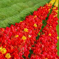 La via dei tulipani di