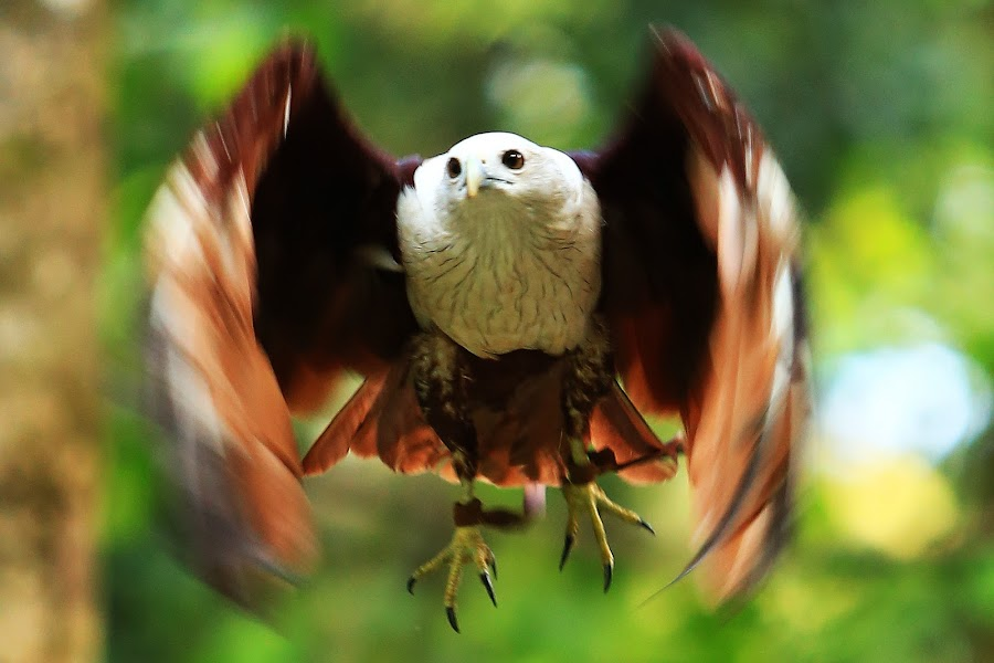 no title by Rizano Sumampouw - Animals Birds