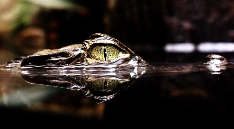 eyes di marti87