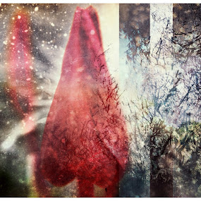 Seasons by Mansi Bhatia - Abstract Fine Art ( iphoneography, macro, seasons, snow, trees, flower )