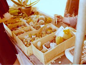 Photo: Kaktukset kiinnosti
