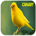 Canaries oiseaux Sounds icon
