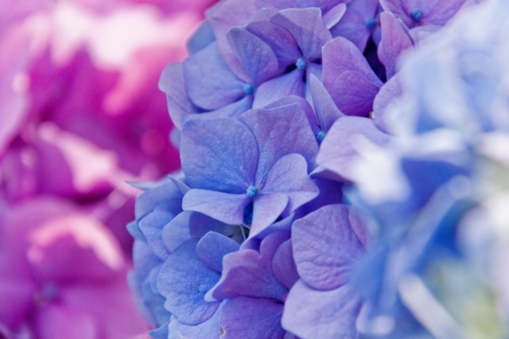 Flickr Colours di Gillio