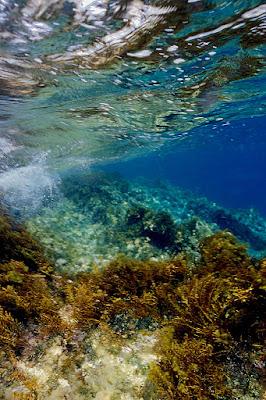 Underwater di Shark