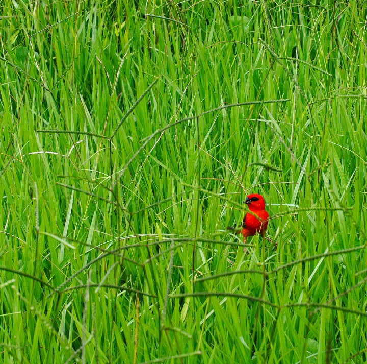 Red Bird... di Francesca Malavasi