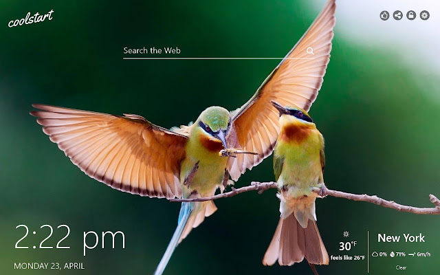 Exotic Birds HD Wallpapers New Tab Theme
