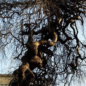 P4071538 by Louis Muñoz-Osses - Nature Up Close Trees & Bushes