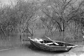 Photo: Me encanta la atmósfera creada entre los árboles y el bote abandonado...