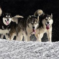 Cani in corsa di