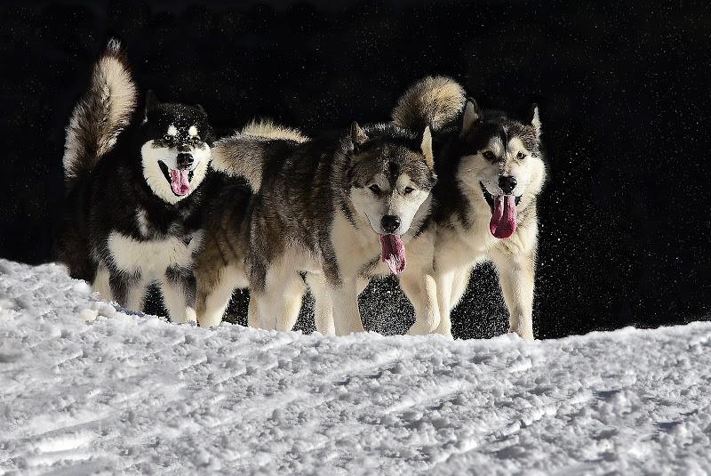 Cani in corsa di BASTET-Clara