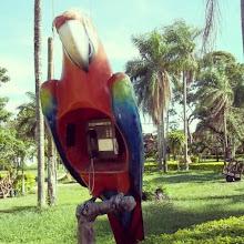 Photo: #phone #RioSelva #SantaCruz #Bolivia