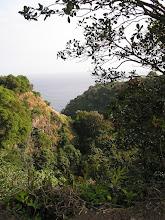 Photo: C1250048 Maui