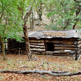 James Cabin, Ramsey Canyon, AZ by Donna Probasco - Buildings & Architecture Decaying & Abandoned (  )