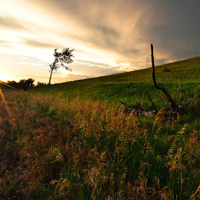 Crofton by Chris Timmerman - Landscapes Prairies, Meadows & Fields ( field, sunset, dirt road, agriculture, storm, landscapes, country,  )
