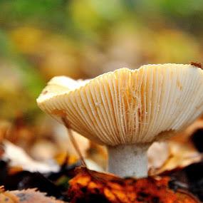 Mushroom by David Branson - Nature Up Close Mushrooms & Fungi (  )