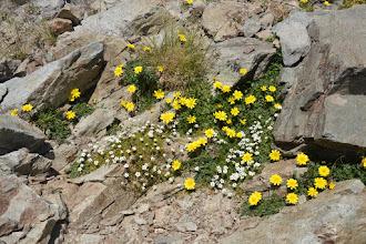 Photo: kvetinové koberčeky