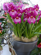 Photo: And indoors, there are orchids galore!