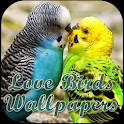 Love Birds Wallpapers icon