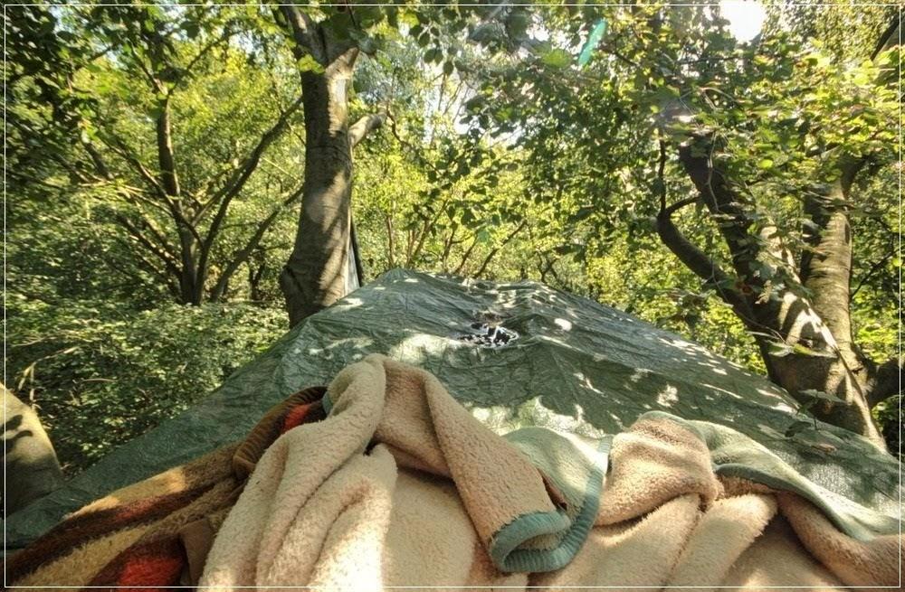 Os moradores das copas das árvores da floresta de Hambach