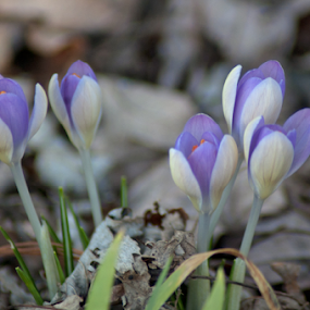 out of the cold by Skye Stevens - Flowers Flowers in the Wild (  )