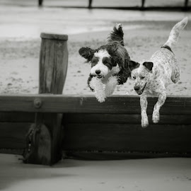 Boys will be boys by Vix Paine - Animals - Dogs Running ( dog )